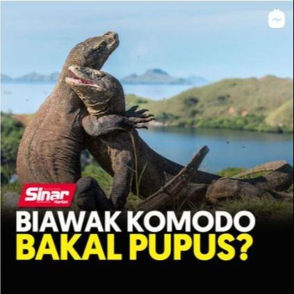 @sinar.harian Biawak Komodo bakal pupus? Link Thumbnail | Linktree