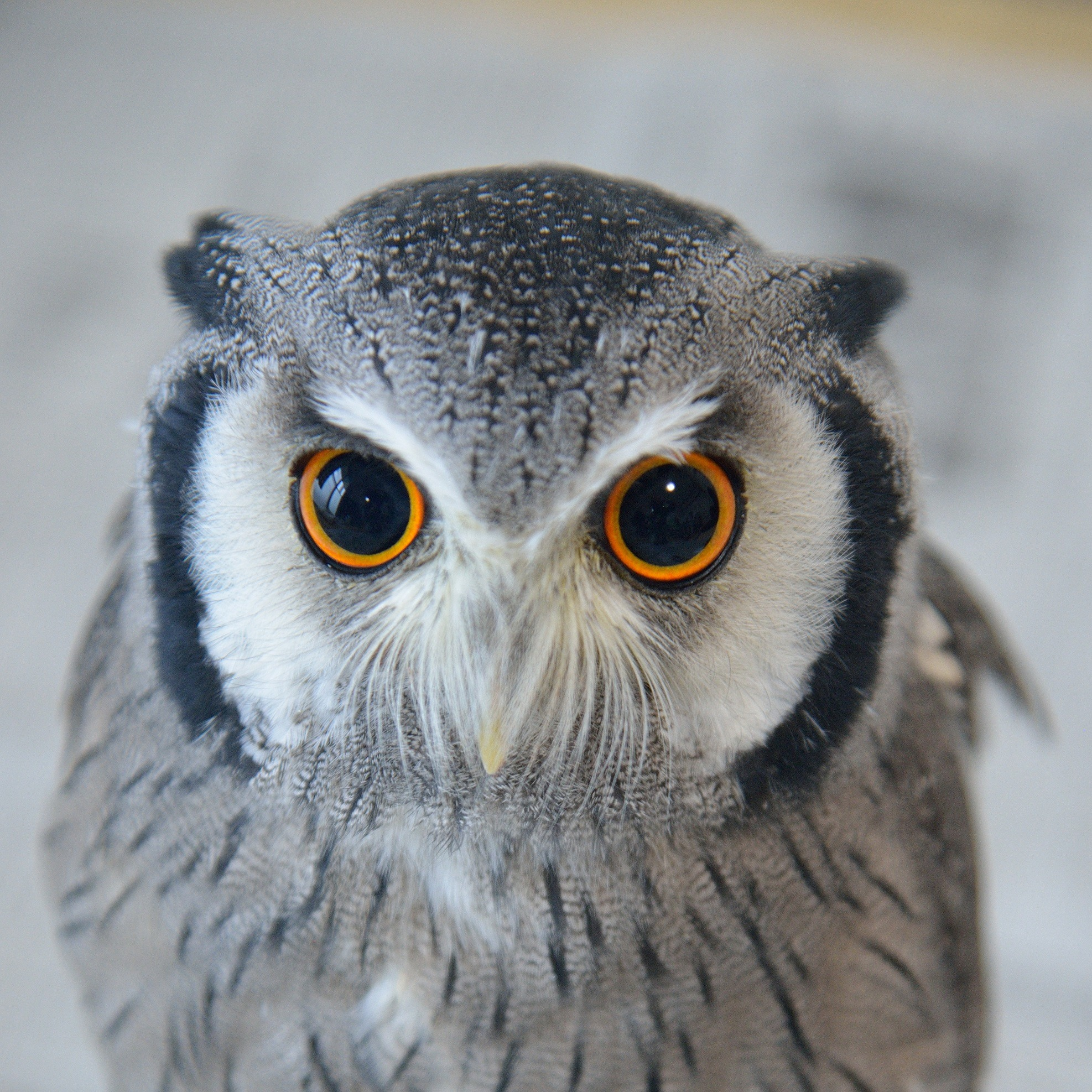 @kururu_owl Profile Image | Linktree