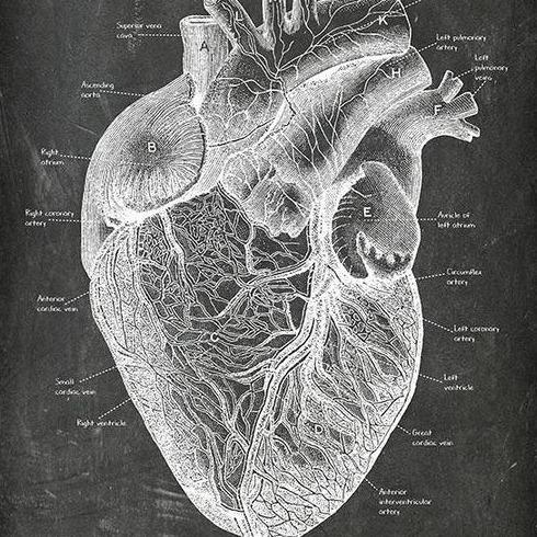 "Codex Anatomicus ""IOHA20"" 20% OFF"