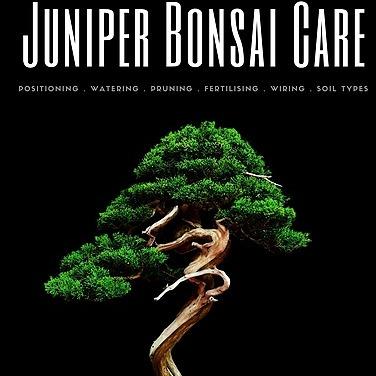 Juniper Bonsai Care Ebook