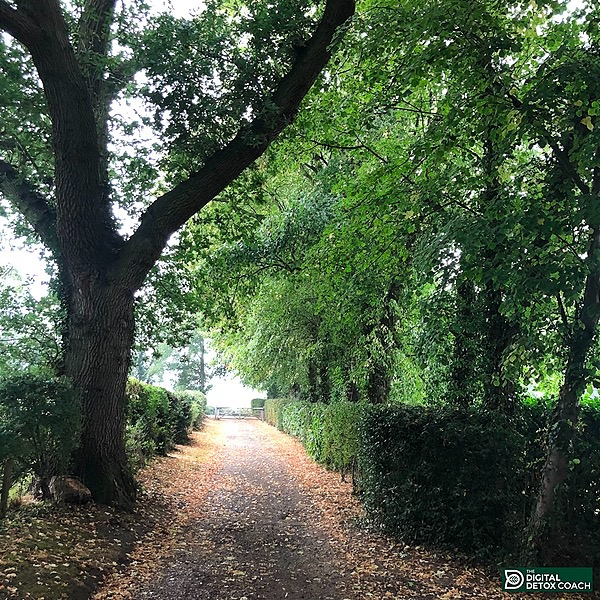 The Digital Detox Coach Do Trees Care To? - The remarkable story of a pear tree Link Thumbnail | Linktree