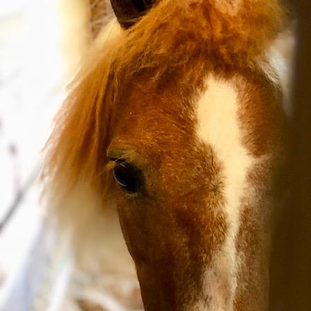 MA Horse Rescue & Outreach Venmo Link Thumbnail | Linktree