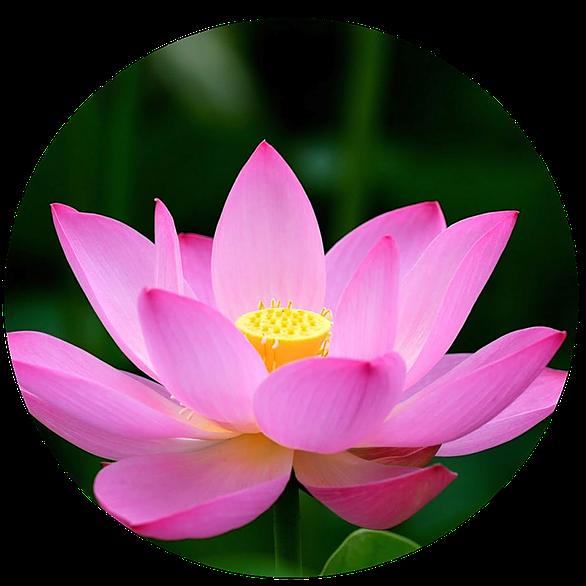 @maarjaurb Profile Image | Linktree