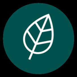 We need trees! Benefits of Trees Link Thumbnail | Linktree