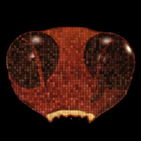 Roach_tm (roach_tm) Profile Image | Linktree