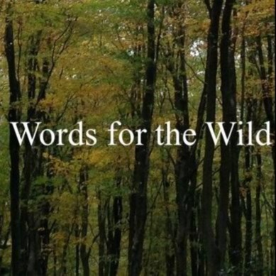 Marcelle Newbold Online poem: We understand.. (Gilbert White poems, Words for the Wild) Link Thumbnail | Linktree