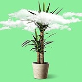 The Atlantic A Popular Benefit of Houseplants Is a Myth Link Thumbnail | Linktree