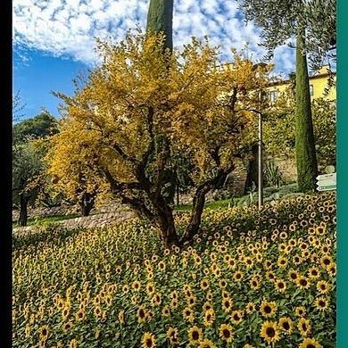 "Bolonie International Garden Photographer of the Year ""The Spirit of Trauttmansdorff"" 2021 Link Thumbnail   Linktree"