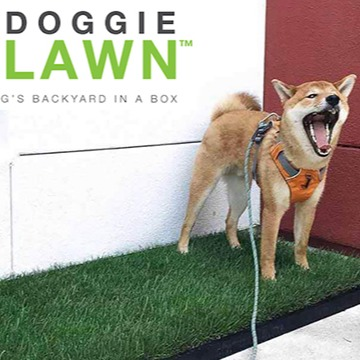 DoggieLawn - Your Dog's Indoor Lawn! (Shankman Discount!)