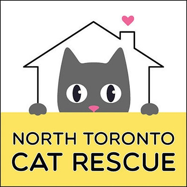 North Toronto Cat Rescue (NTCRescue) Profile Image | Linktree
