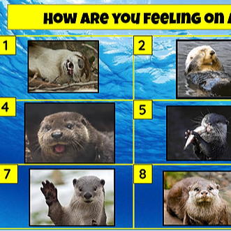 Miss Hecht Teaches 3rd Grade How Are You Feeling?  Otter Link Thumbnail | Linktree