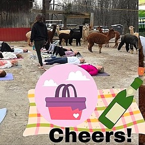 Alpacas, Mimosas & Yoga on the Farm
