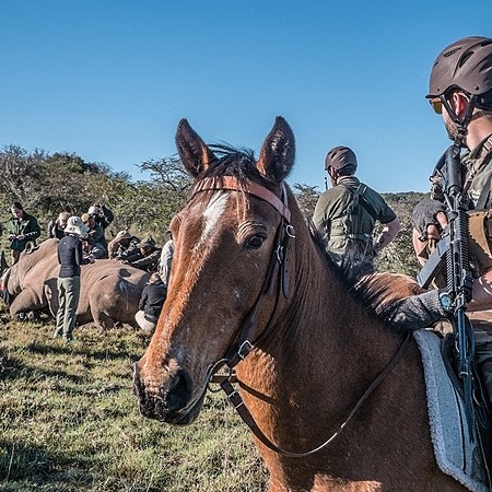 Donate To Support Our Mounted Anti Poaching Units