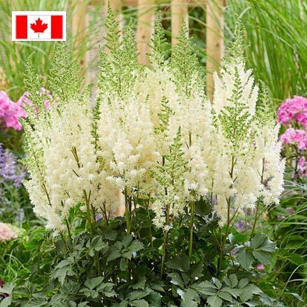 Breck's Canada Spring Sale