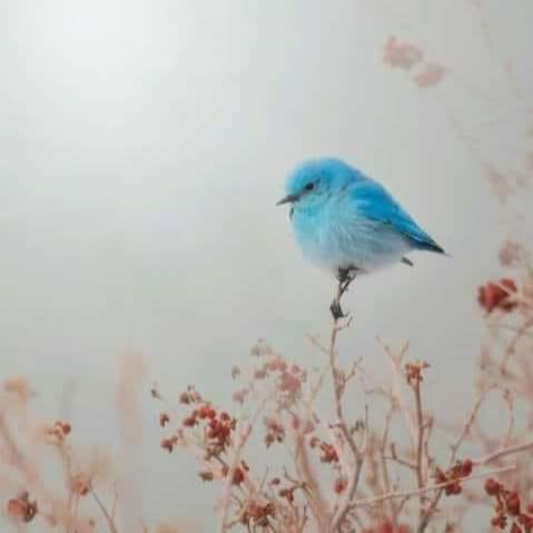 @vanessaostariz Mi perfil Link Thumbnail   Linktree