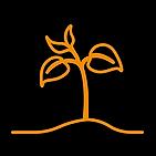 BODDHI Branding