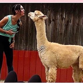 """Alpacas Make You Smile®"" Pilates with ""Pacas"" Link Thumbnail | Linktree"