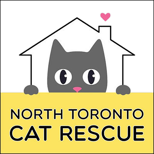 North Toronto Cat Rescue NTCR Official Website Link Thumbnail | Linktree