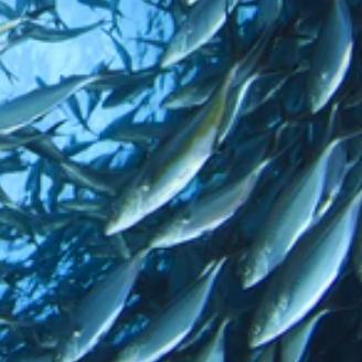 @oceana Maximum Sustainable Yield Link Thumbnail   Linktree