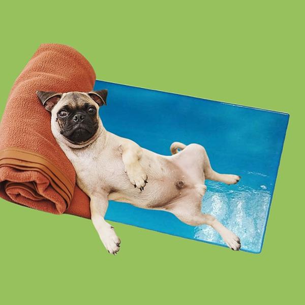 Marlis Both Gesundheits-Pad für Tiere Link Thumbnail | Linktree