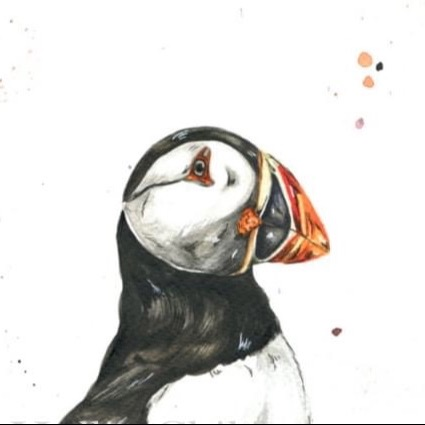 Every Last Puffin (everylastpuffin) Profile Image | Linktree