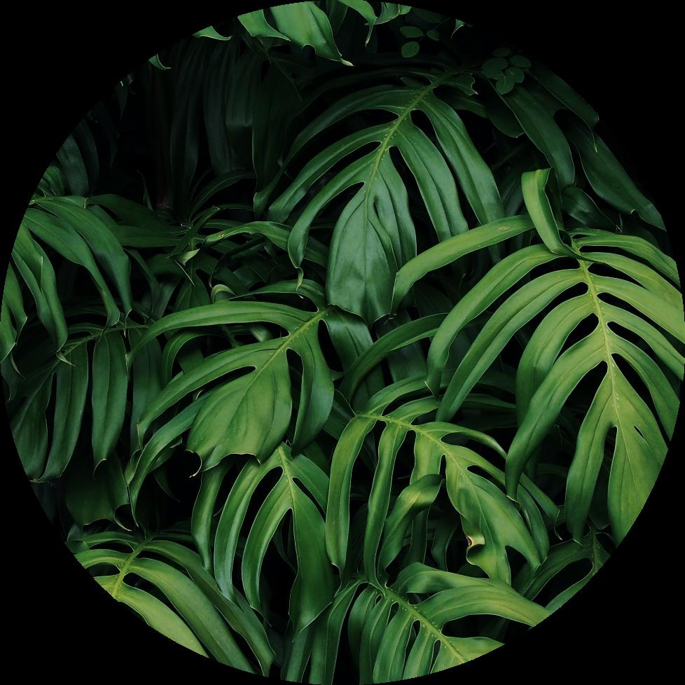 @greeneryradio Profile Image | Linktree