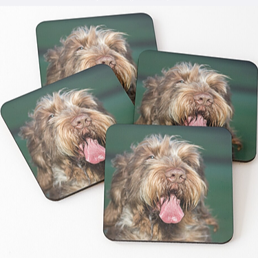 Spinone Drinks Coasters