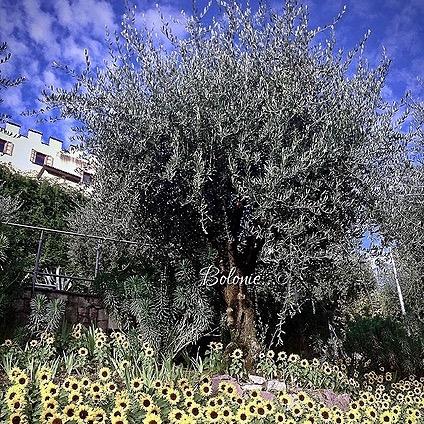 Bolonie Trautsmandorff Garden Sunflowers Bolonie Italian news Link Thumbnail   Linktree