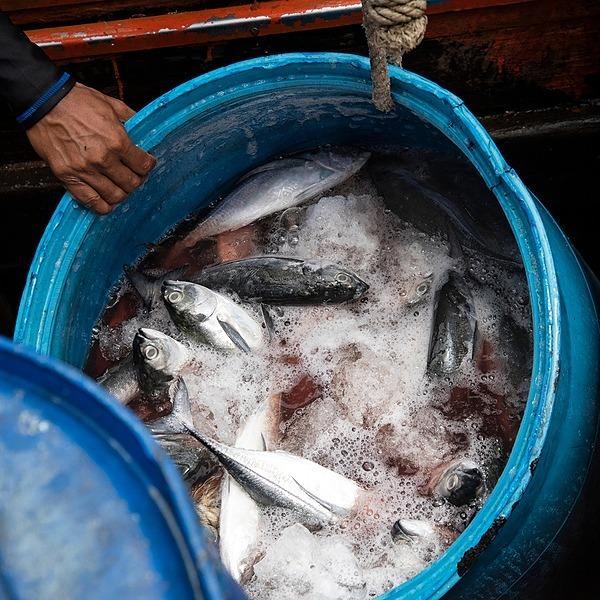 @oceana Stop Illegal Fishing Link Thumbnail   Linktree